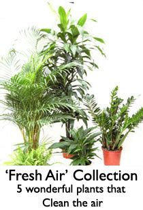 best plants for apartment air quality 10 best plants for improving air quality raven tao big