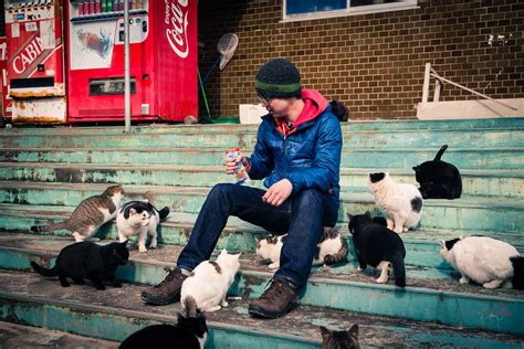 cat island in japan tashirojima a paradise for cats the worlds foremost