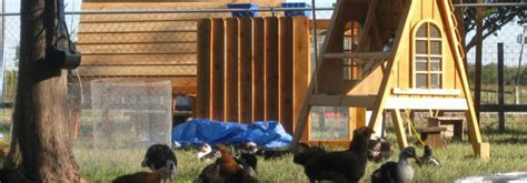 Backyard Chickens Greenville Sc Ranch Coops Backyard Chicken Duck Coops For Sale