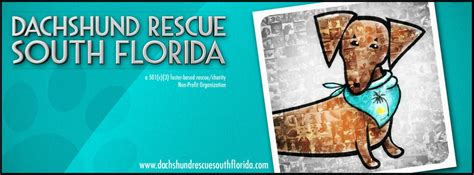 rescue south florida pet shelters in weston fl