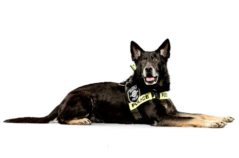 police dog house jordan stead s telling portraits of seattle pd s k 9 units