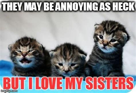 Cute Kitty Memes - 17 best ideas about cute kitten meme on pinterest cute