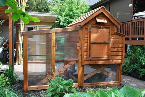 Backyard Chickens Seattle Construction Remodel