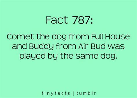 what kind of dog is comet from full house comet the dog from full house and buddy from air bud was