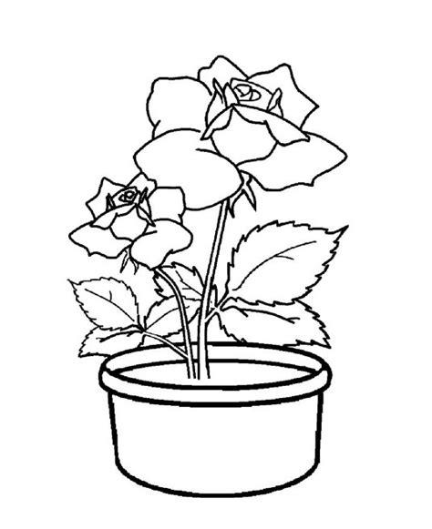 Gambar Beserta Sepatu All cara menggambar bunga kembang sepatu dengan pensil warna