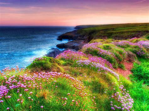 landscape ocean shore sea green grass spring flowers