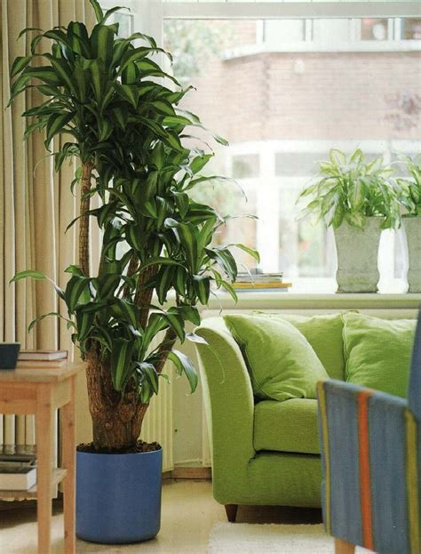 pictures of big house plants