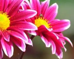 sognare fiori significato cosa significa sognare di ricevere fiori il miglior sito