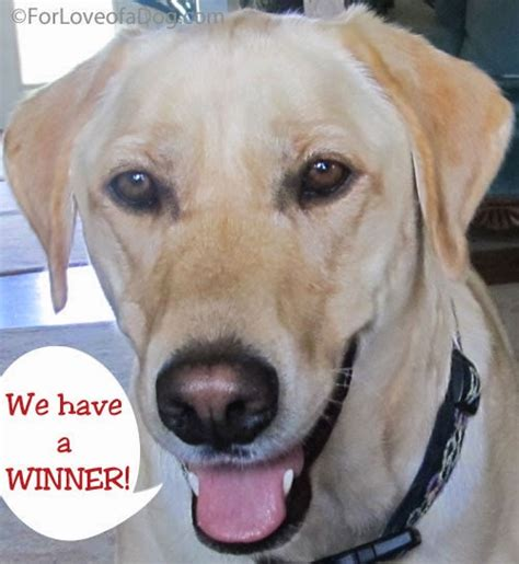 Dogs For Giveaway - talking dogs at for love of a dog we have a winner in our may dog jewelry giveaway