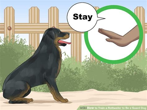 how to a rottweiler to be a guard 3 ways to a rottweiler to be a guard wikihow