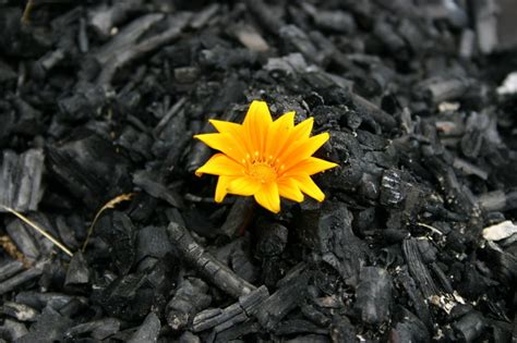 out of ashes pigtails purses and perspective out of the ashes we rise