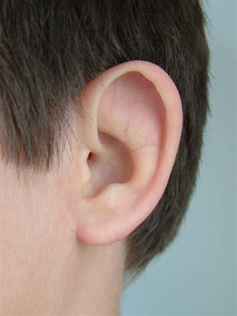 with ears prosthetic photos and ear community