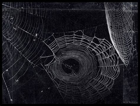Spider Web Pattern Photoshop | spider web photoshop brushes 2d and or merchant resources
