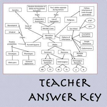 cell concept map answers mendelian genetics concept map by brilliant biology tpt