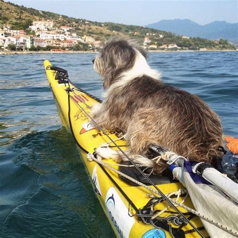 best kayak for dogs i quit my to kayak the mediterranean sea and took a 3 years 5000km so far