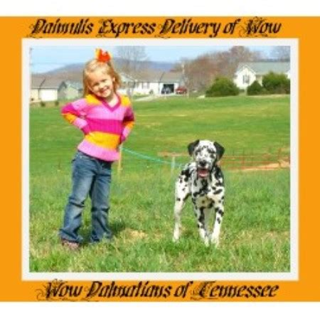 rottweiler breeders in ct rottweiler breeders in connecticut freedoglistings breeds picture