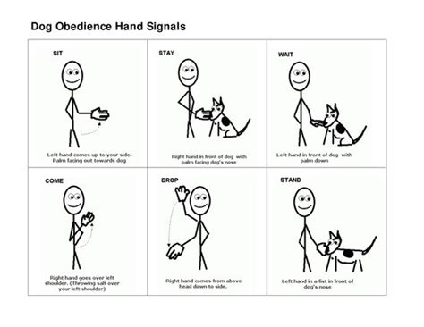 obedience for dogs basic obedience signals for stand pictures to pin on pinsdaddy