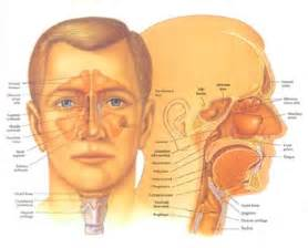 ear nose and throat disorders causes symptoms