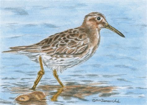sandpiper by dominic white