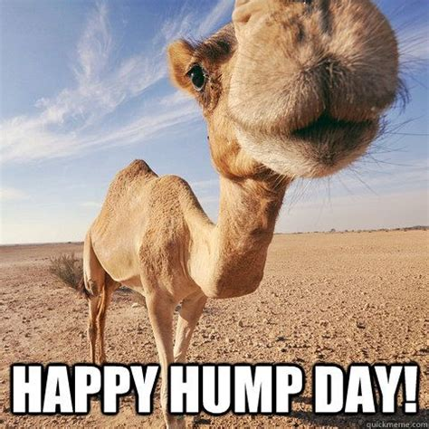Hump Day Meme Funny - happy hump day funny pinterest hump day happy and