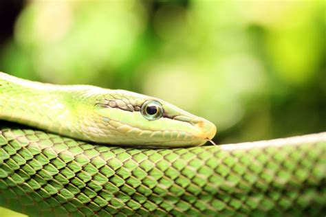 wallpaper green snake hd wallpaper of green snake hd wallpapers