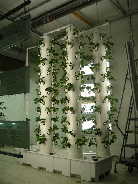 plant profile albion strawberries home hydroponics