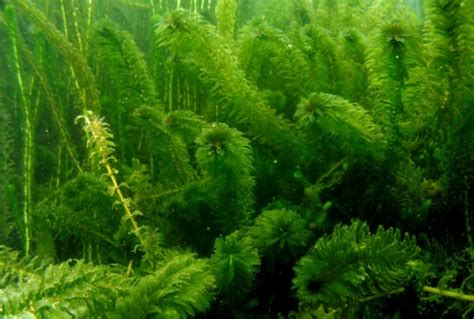 aquascape wood aquascape wood 20 images list nation wallpapers 24 plants forest wallpapers