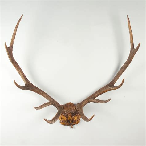 Wall Antlers Decor by Oklahoma Oak Leaf Antlers Wall Wall At
