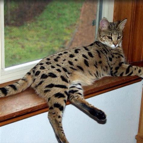 Payung Lipat Kucing 1000 ide tentang kucing cantik di kucing