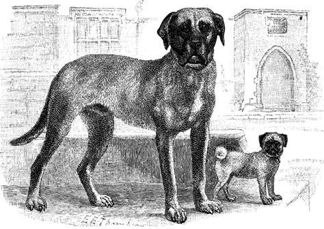 mastiff pug mastiff and pug clipart etc