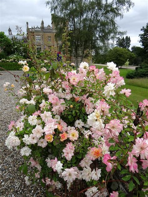 englefield house garden englefield house gardens berkshire england england
