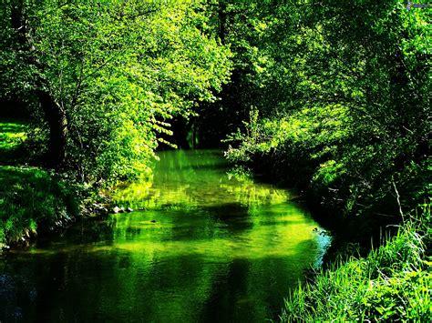 la verde naturaleza verde