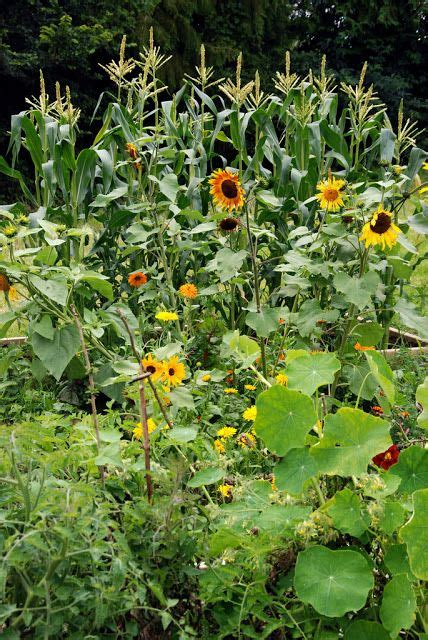 Vegetable Garden Flowers Flowers To Plant In Your Vegetable Garden That Will Repel Pests And Attract Pollinators