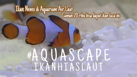 ikan nemo  akuarium air asin youtube