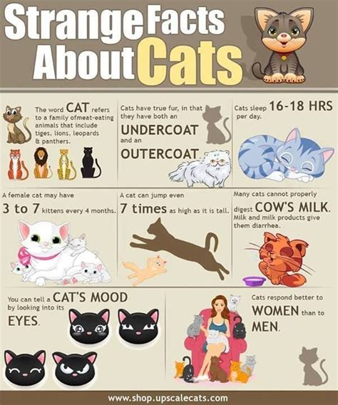 strange facts about cats cats pinterest