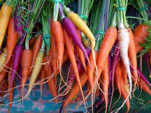 different colored carrots horticulture varieties of colored carrots steve s