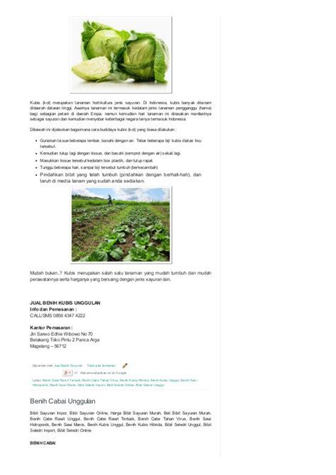 Jual Bibit Seledri Unggul 0856 4347 4222 jual benih sayuran benih sayuran unggul