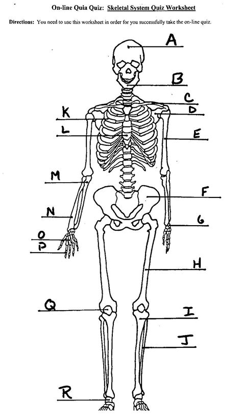 detailed skeletal system diagram skeletal system diagram unlabeled anatomy organ