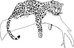 jaguar coloring pages jaguar coloring pages only coloring pages