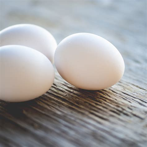 breeds photo contest white egg layers