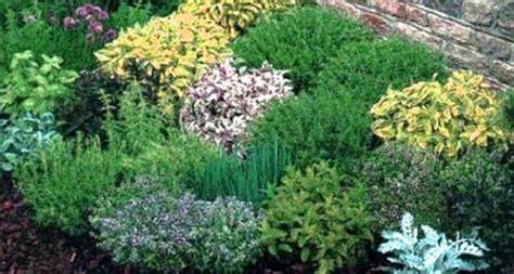piante aromatiche in giardino delle erbe aromatiche dai giardini dalle ville e