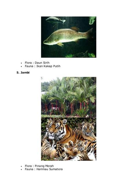 Gajah Madu wilayah flora dan fauna barat tipe asiatis