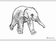 Coloring Pages of Elephants - Download and Print for Free Eagle Coloring Pages Free