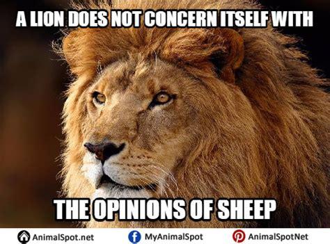 Lion Sex Meme - lion memes