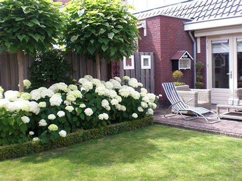 front yard landscaping with hydrangeas landscaping with hydrangeas gardens garden borders and