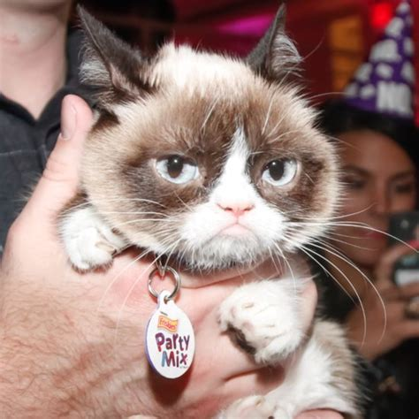 Grump Cat Meme Generator - grumpy cat popsugar tech