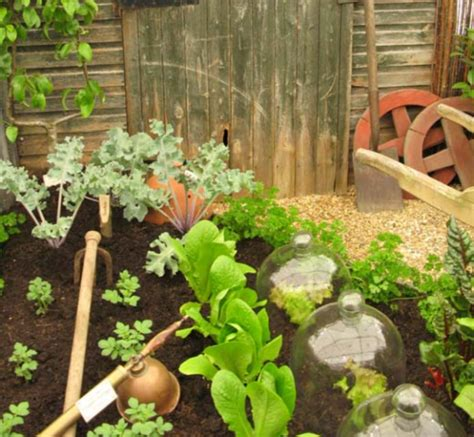 Cool Vegetable Garden Picture Png Cool Vegetable Gardens