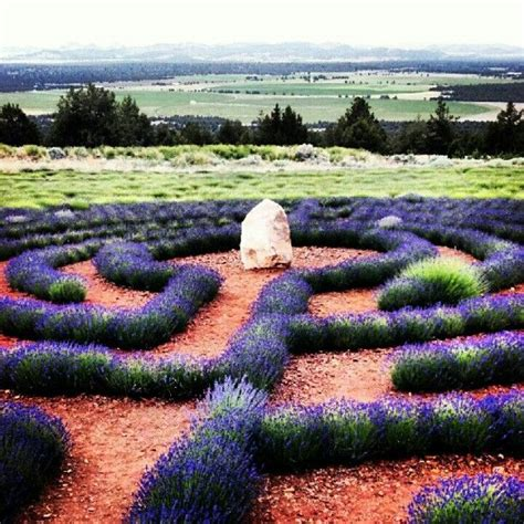 lavender labrynth labyrinth lavender garden mt shasta ca been there done that loved it