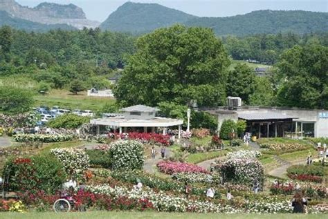 ibaraki flower park ishioka лучшие советы перед посещением