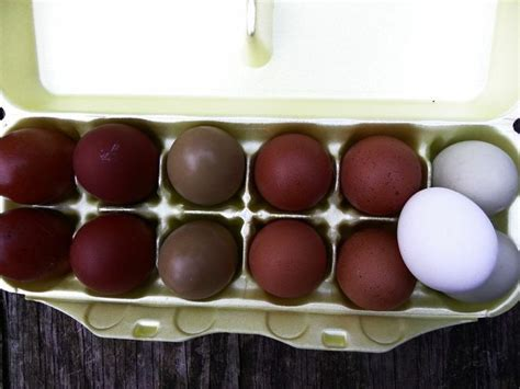 egg color chart chicken color chart black copper maran eggs color